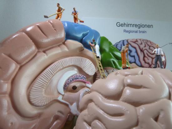 Gehirn -Reinigung